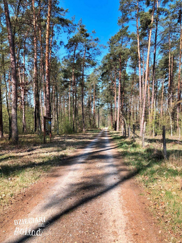 ścieżka Kleniewo