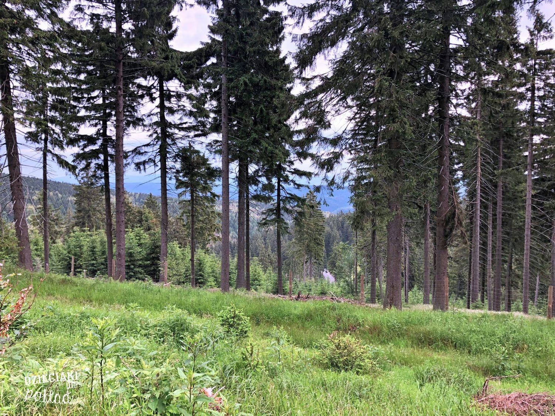 Orlica- szlak zielony